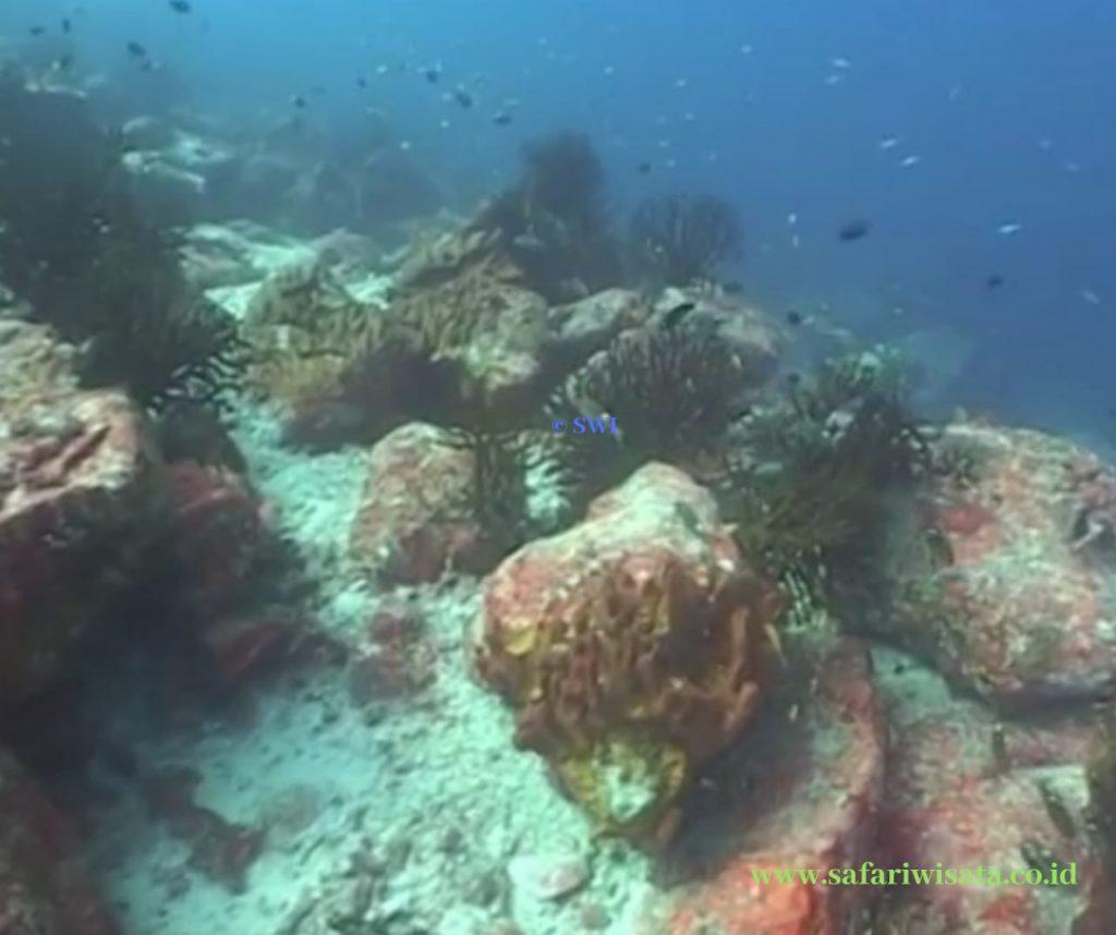 East Seulako Dive Spot