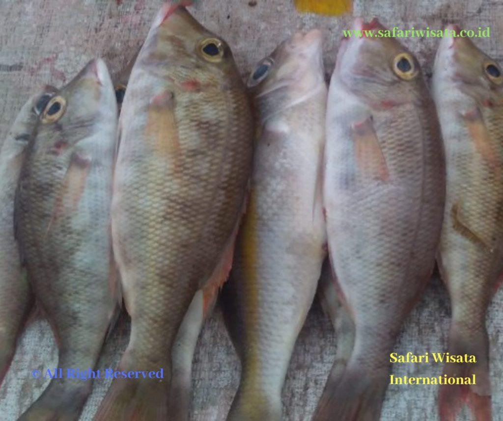 Spot Mancing Aceh