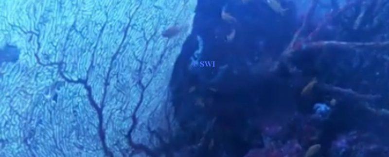Seulako Cave Dive Site