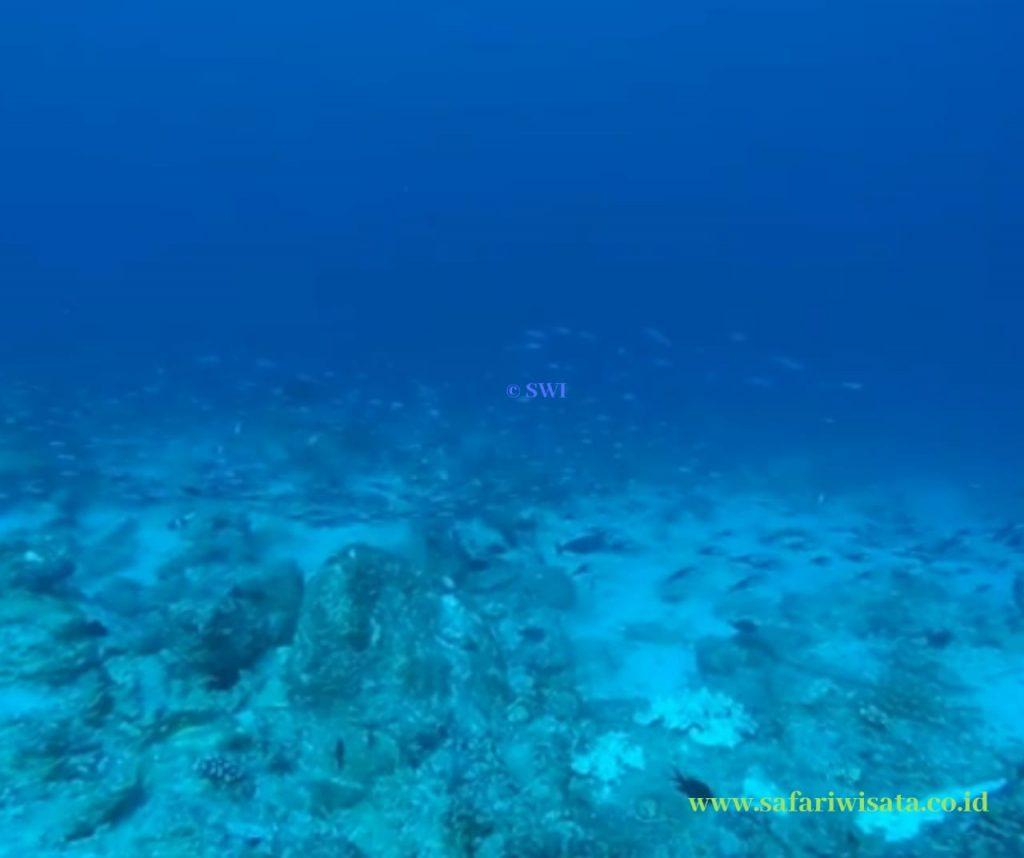 Seulako Drift Diving Spot