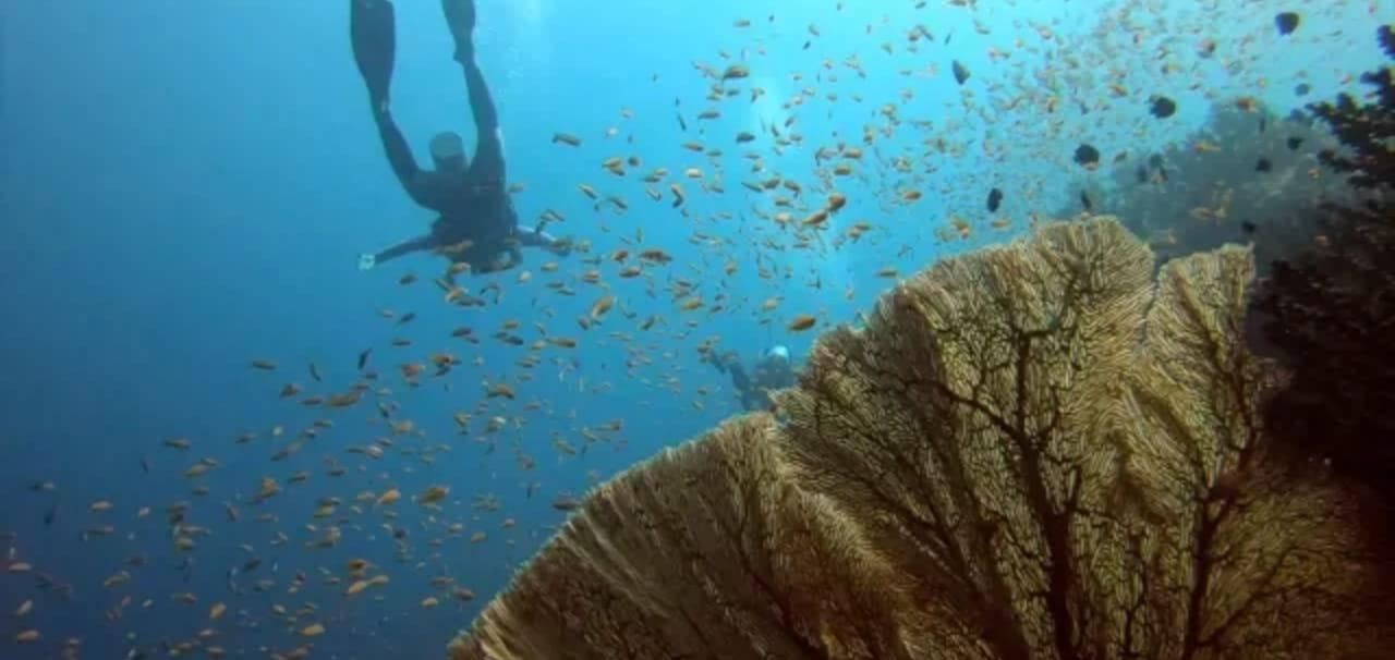 Paket Diving di Sabang (Kursus Menyelam & Fun Scuba Diving)