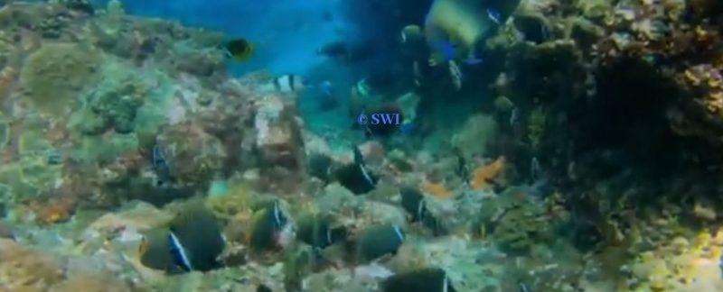 diving di Pulau Rondo Sabang
