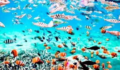 snorkeling di sabang