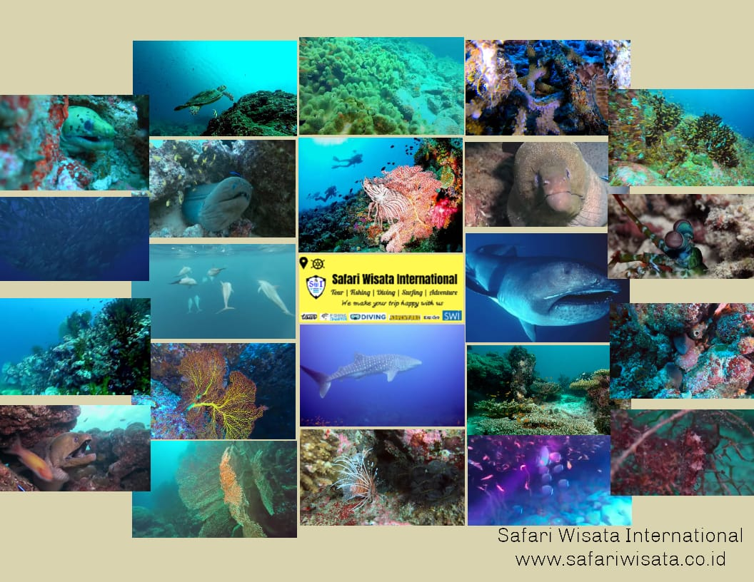 Paket Diving di Sabang (Kursus Menyelam & Fun Scuba Diving)