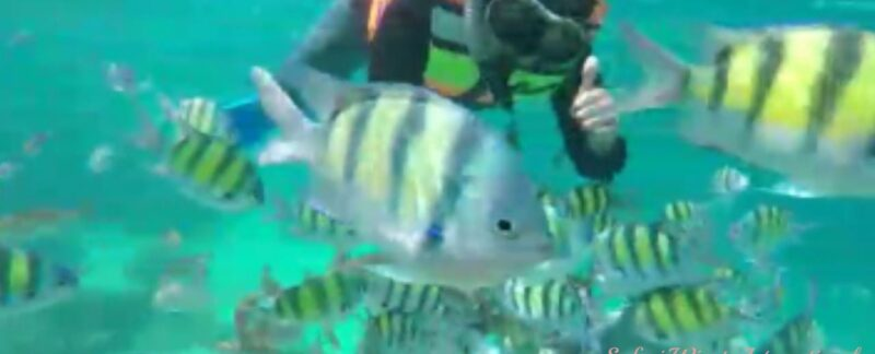 snorkeling trip sabang