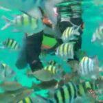 snorkeling sabang